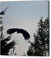 Flight Of The Black Crow Canvas Print
