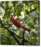 Flight Of The Cardinal Canvas Print