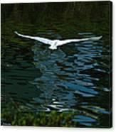 Flight Of The Egret Canvas Print
