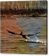 Flight Of The Pelican-featured In Wildlife-newbies And Comfortable Art Groups Canvas Print