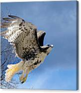 Flight Of The Red Tail Canvas Print