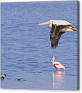Flight Of The Pelican Canvas Print