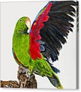 Flirting Parrot By Barbara Heinrichs Canvas Print