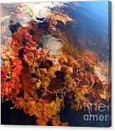 Floating Algae Canvas Print