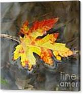 Floating Autumn Leaf Canvas Print