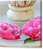 Floating Camellias Canvas Print