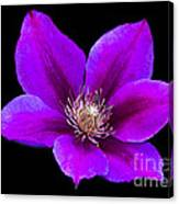 Floating Clematis Canvas Print