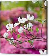Floating Dogwood Canvas Print