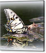 Floating In Water - Swallowtail -butterfly Canvas Print