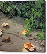 Floating Leaves By George Wood Canvas Print