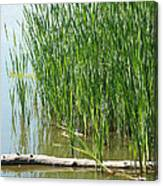 Floating Log In A Marsh Canvas Print