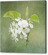 Floating On Green Canvas Print