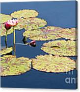 Floating On The Breath Canvas Print