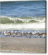 Flock And Wave Canvas Print