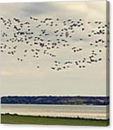 Flock Of Birds Canvas Print