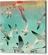 Flock Of Seagulls, Miami Beach Canvas Print