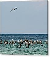 Flock Of Seagulls Canvas Print