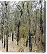 Flooding Dry Creek Canvas Print