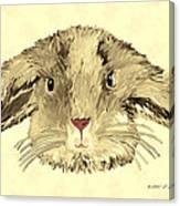 Floppy Bunny Canvas Print