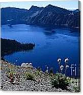 Flora Of Crater Lake Canvas Print