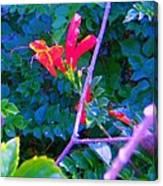 Floral 5 Canvas Print