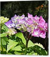 Floral Art Photography Pink Lavender Hydrangeas Canvas Print