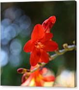 Floral Bokeh  Canvas Print