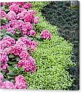 Floral Curves Canvas Print