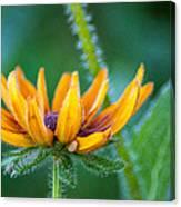 Floral Fuzz Canvas Print