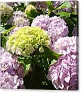 Floral Pink Lavender Hydrangea Garden Art Prints Canvas Print