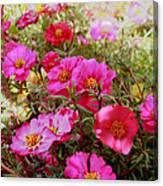 Floral Portulaca Garden Canvas Print
