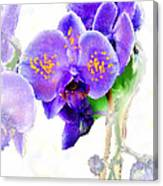 Floral Series - Orchid Canvas Print