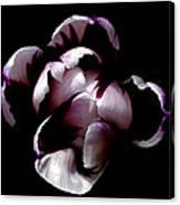 Floral Symmetry Canvas Print