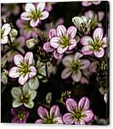 Floral Wallpaper Canvas Print
