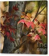 Florida Autumn Leaves Canvas Print