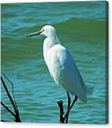 Florida Egret Canvas Print
