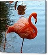 Florida Flamingo Canvas Print