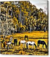 Florida Horses Two Canvas Print