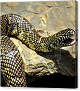 Florida King Snake Lampropeltis Getula Floridana Usa Canvas Print