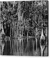 Florida Naturally 2 - Bw Canvas Print
