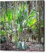 Florida Palmetto Bush Canvas Print