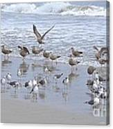 Florida Seabirds Canvas Print