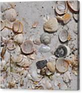 Florida Seashells Canvas Print
