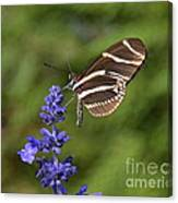 Florida State Butterfly Canvas Print