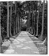Florida Walkway Black And White Canvas Print