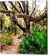 Florida Woods Canvas Print