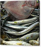 Floundering Canvas Print