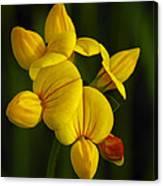 Flower 105 Canvas Print
