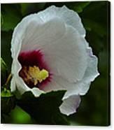 Flower 157 Canvas Print