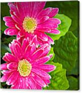 Flower 3 Canvas Print